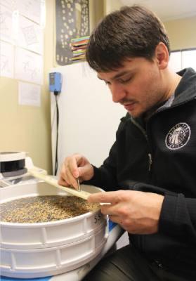 Brandon Ade, owner of Blacklands Malt in Leander, tests raw rye grain for quality.