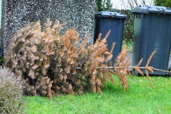 Here is how to dispose of your holiday tree. (Keikona/Adobe Stock)