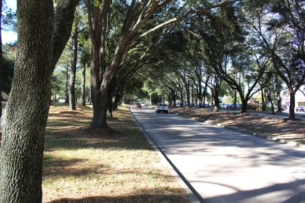 """Kingwood is known as """"the livable forest"""" due to its plethora of trees and vegetation. (Kelly Schafler/Community Impact Newspaper)"""