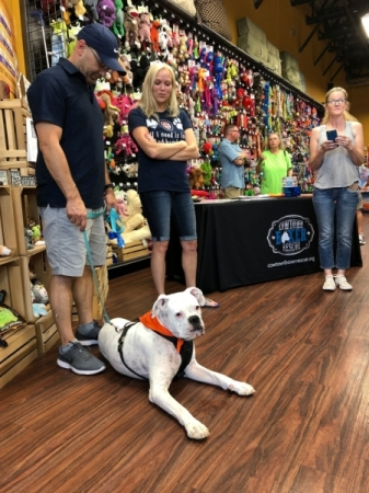 Cowtown Boxer Rescue is holding a meet-and-greet for adoptable dogs. (Courtesy Cowtown Boxer Rescue)