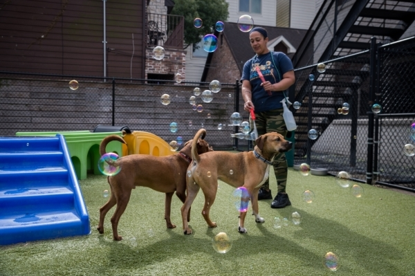 Staff members at Jackson's keep the animals engaged throughout the day and even stay with dogs that sleep overnight. (Nathan Colbert/Community Impact Newspaper)
