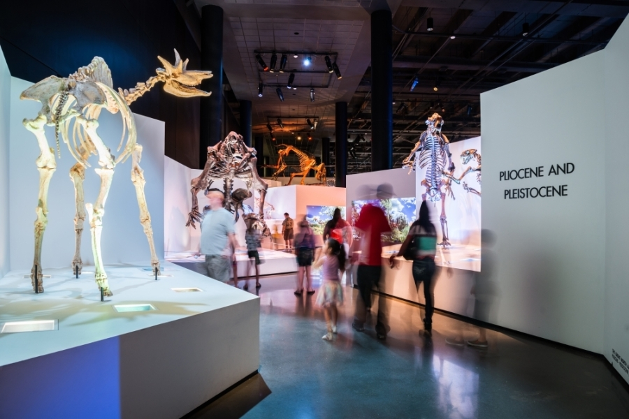 The Houston Museum of Natural Science is among the institutions closed until further notice as public gatherings are being discouraged amid the coronavirus outbreak. (Courtesy Visit Houston)