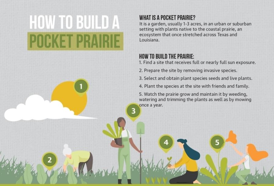 Pocket Prairie