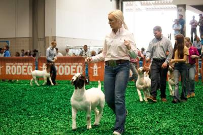 By foregoing the Open Show, HLSR officials said they will be able to limit the number of on-site participants and spread out Junior Show events over a longer period of time. (Courtesy Houston Livestock Show and Rodeo)