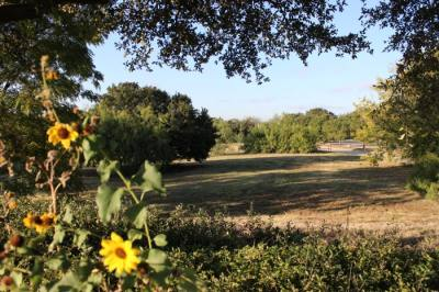 The city of Lewisville is working to acquire this 2-acre piece of land in the Triangle area of town. The city intends to convert the undeveloped land into a public park. (Daniel Houston/Community Impact Newspaper)