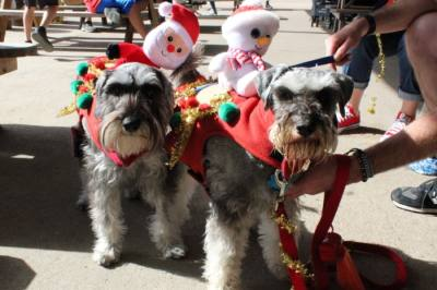 Dec. 13: Ugly sweater 'pawty'