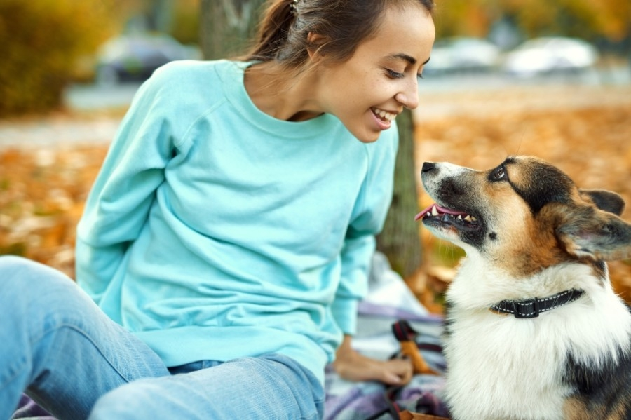 Pet Supplies Plus is coming to Friendswood in early 2021. (Courtesy Adobe Stock)