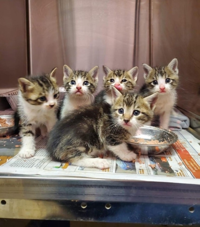 New Braunfels City Council approved an added building and lot used specifically for spaying and neutering dogs and cats. (Courtesy Humane Society of the New Braunfels Area)
