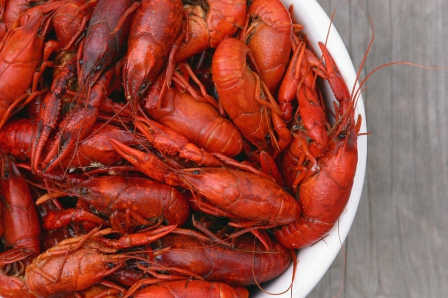 Crawfish Bistro is slated to open in Missouri City in mid-February. (Courtesy Terry Poche/Adobe Stock)