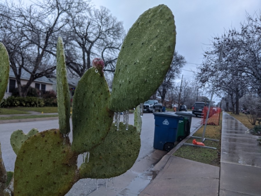 There will be no trash and recycling pickup services Feb. 15 due to inclement weather conditions, the city of Pflugerville announced Feb. 12. (Iain Oldman/Community Impact Newspaper)