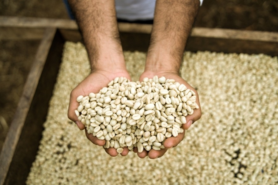 EDG Coffee is a Nicaraguan coffee producer that sells coffee that it grows on its own farm online and through a home subscription service. (Courtesy EDG Coffee)