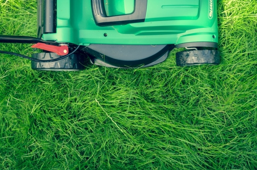 With aquifer levels dropping rapidly, increased drought restrictions mean less water for lawns in San Marcos. (Courtesy Unsplash)