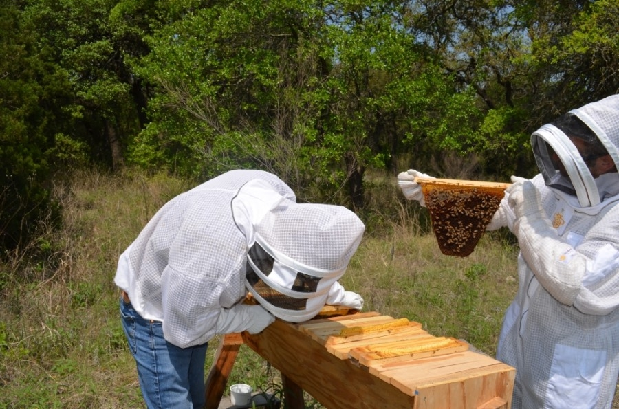 From left: Peter Keilty and Chris Abramson of Bees for All tend to one of their hives. (Amy Rae Dadamo/Community Impact Newspaper)