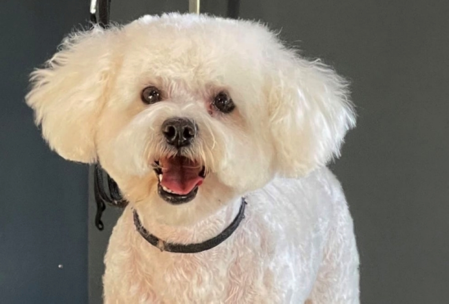 A fluffy white dog smiling