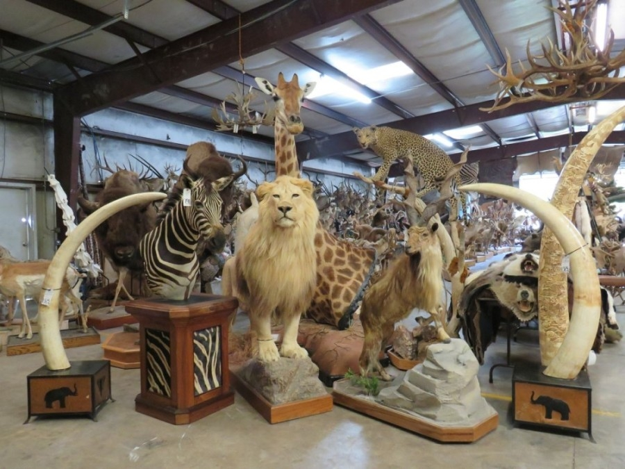 Taxidermy King auction