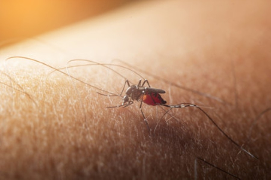 mosquito sitting over skin