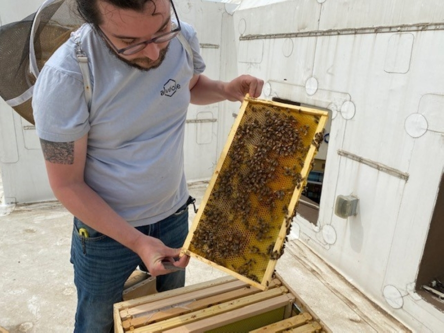 A beekeeper opening up a hive