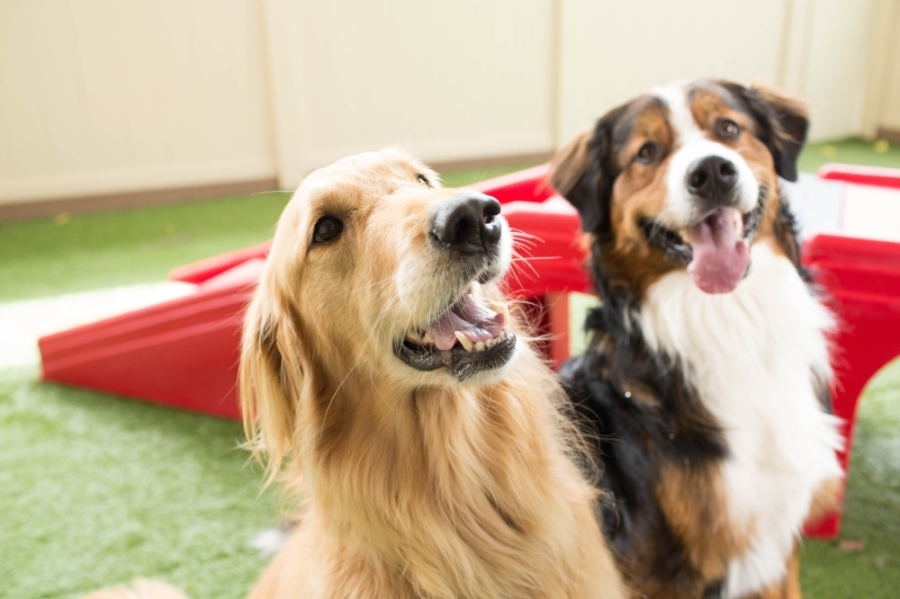 Camp Bow Wow opened a new location June 11 in Humble. (Courtesy Camp Bow Bow)