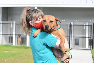Harris County Pets facilitates pet adoptions, foster placements and more. (Courtesy Harris County Pets)