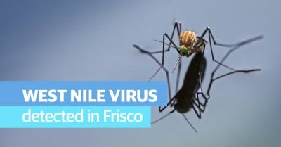 Frisco confirmed another mosquito pool that tested positive for West Nile virus. (Courtesy Adobe Stock)