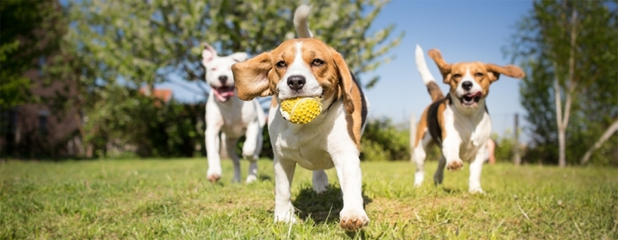The owner of The Hindquarters Pet Supply has more than 300 hours of training in pet nutrition and is able to help San Marcos pet owners chose the right food for different life stages. (Courtesy Fotolia)