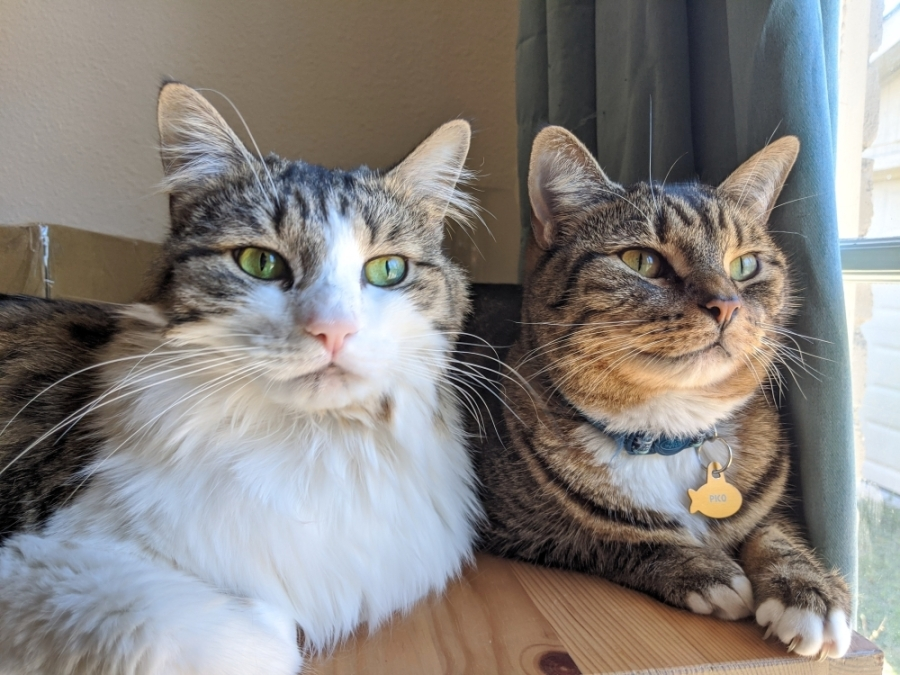 Cats soaking up light by the window
