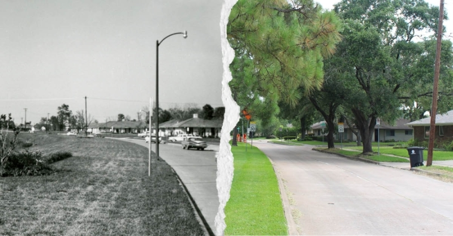 The passage of time in Meyerland brought a row of tall trees to a segment of South Rice Avenue between Runnymeade Drive and South Braeswood Boulevard. (Photos courtesy Woodson Research Center, Rice University, Savannah Kuchar/Community Impact Newspaper)