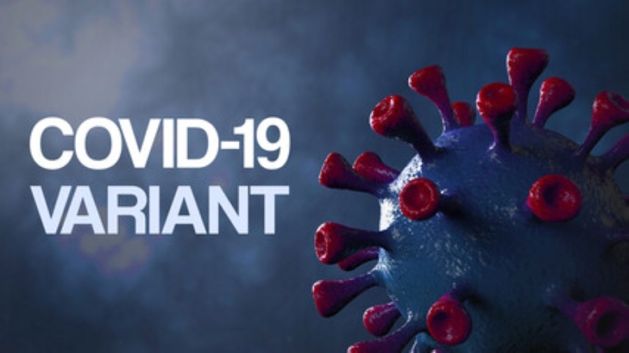 The variant of COVID-19 was identified in three test samples tied to a church camp's outbreak. (Courtesy Adobe Stock)
