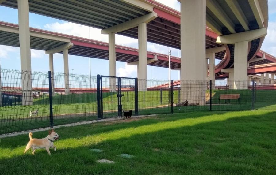 Dog park.