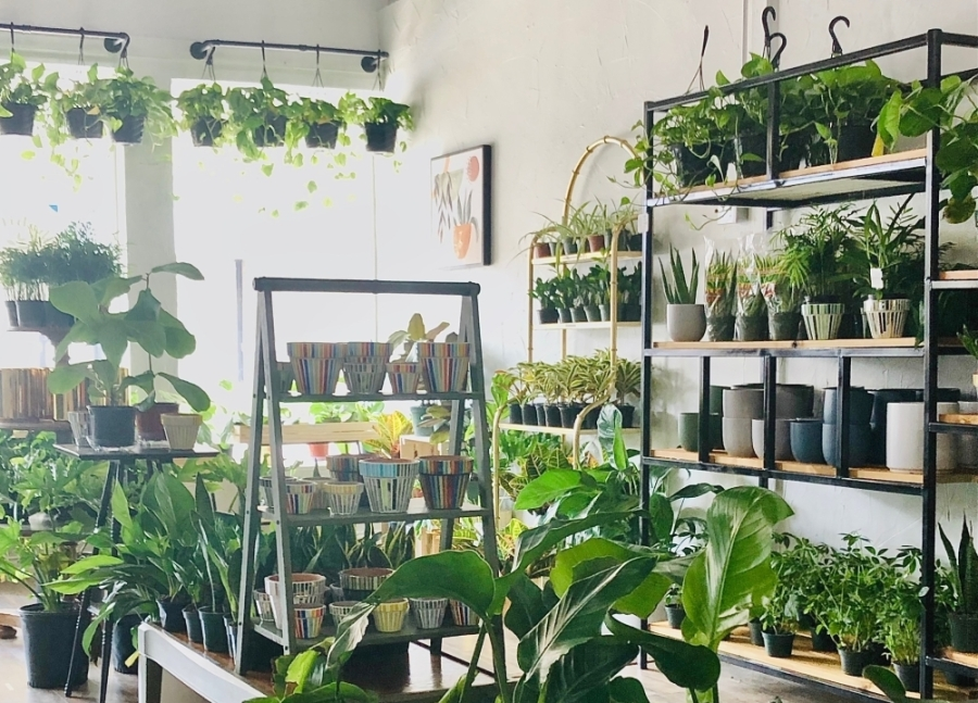 Habitat Plants   Coffee is now open in downtown McKinney. (Courtesy Habitat Plants   Coffee)