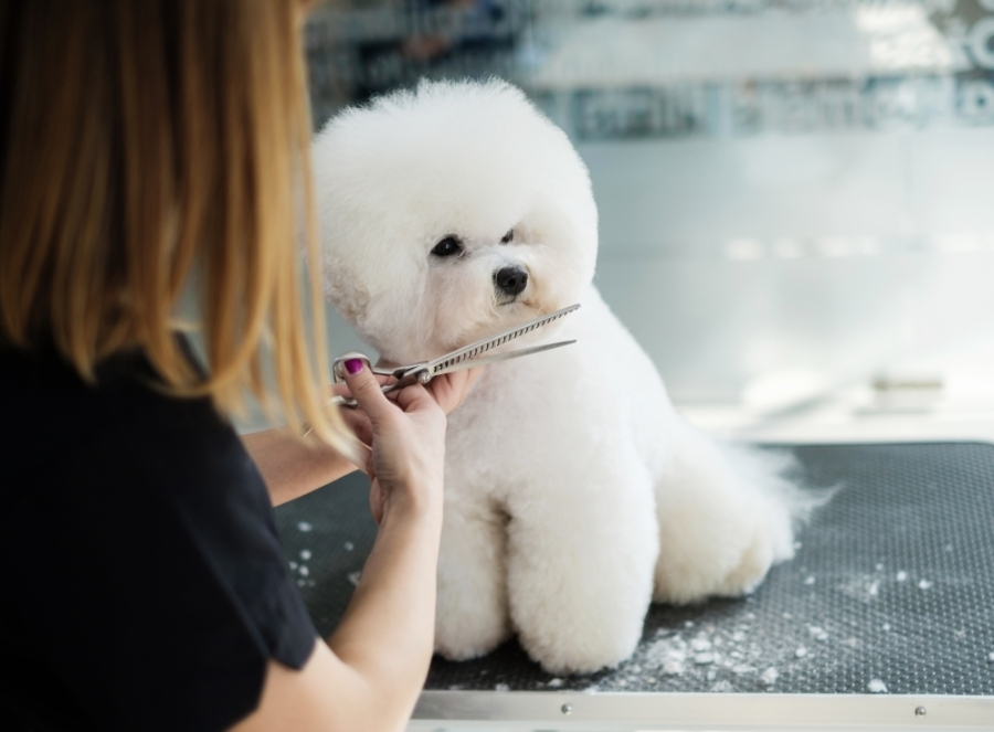 The Pit Stop Grooming opened in Georgetown on July 1. (Courtesy Adobe Stock)