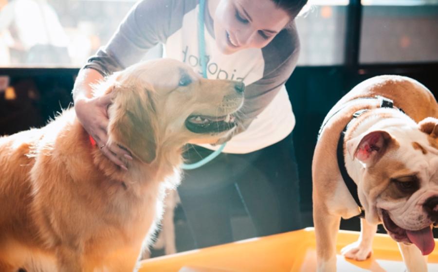 A woman pets a dog