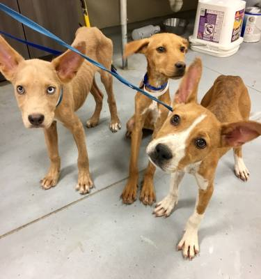 Montgomery County commissioners are funding two new animal cruelty investigators. The county previously did not have a unit for animal cruelty crimes, according to Precinct 2's Captain Greg Thomason. (Courtesy Montgomery County Animal Shelter)