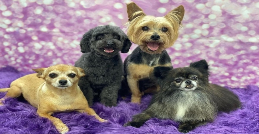 The dog grooming service Glam Bam Paws officially opened June 29. (Courtesy Glam Bam Paws)