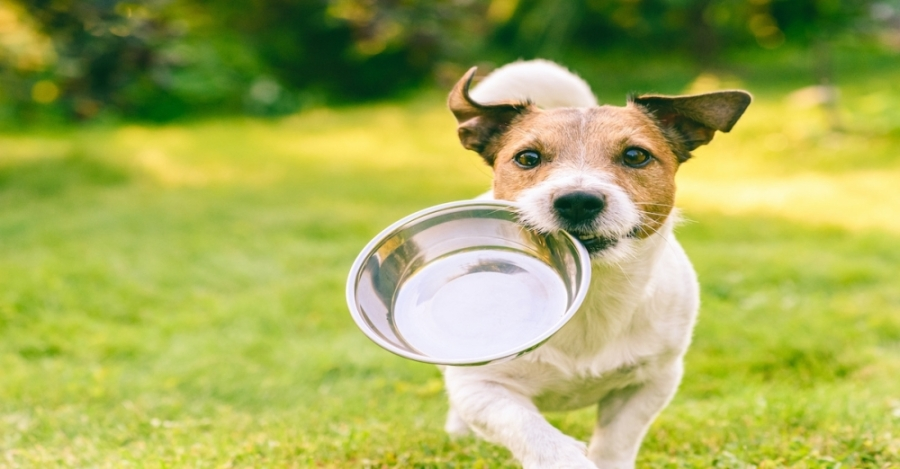 Wild at Heart Canine Academy, a dog training service, is moving to a facility in Fort Worth and will hold a grand opening Sept. 12. (Courtesy Adobe Stock)