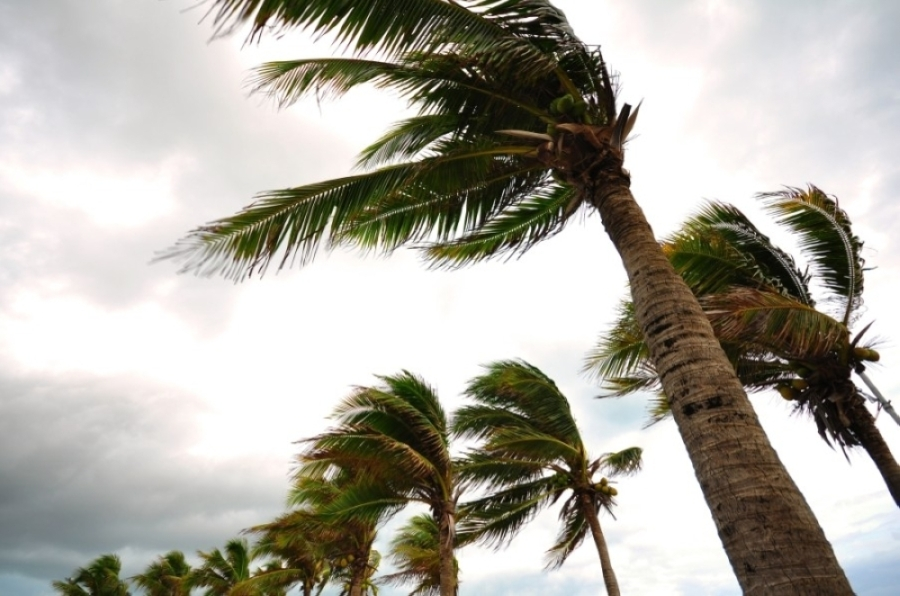 palm trees blowing in wind during storm