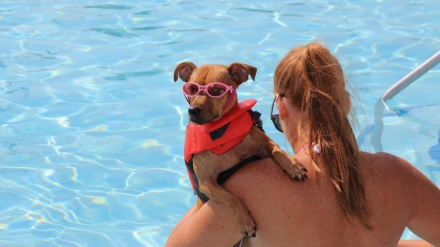 Cool off with the family dog on Sept. 18 at the Paws in the Pool event at Frisco Water Park. (Courtesy city of Frisco)