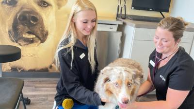 CityVet offers routine exams for dogs, among other animals. (Courtesy CityVet)