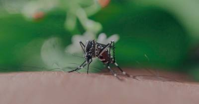 A positive West Nile virus sample was found near 240 McDonwell School Road in Colleyville on Sept. 20. (Courtesy Pexels)