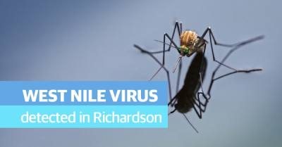 City health officials decided to spray two portions of Richardson after mosquitoes tested positive for the West Nile virus, according to a city release. (Courtesy Adobe Stock)