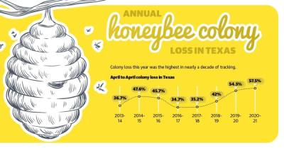 After five days of freezing weather in early 2021, beekeepers in the Tomball and Magnolia areas said the effect on their populations was mixed despite survey data showing a decline in honeybee colonies.