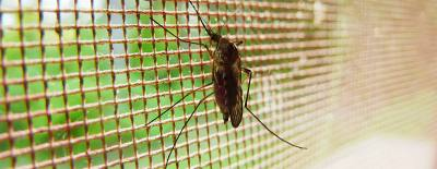 Two test samples of mosquitoes in Hutto tested positive for West Nile Virus.