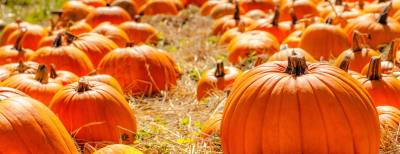 The first day of fall is Sept. 21.