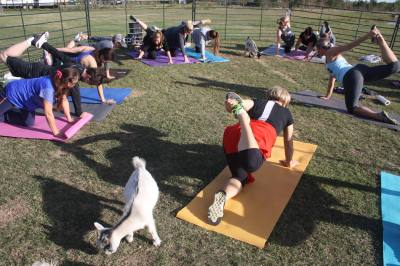 Kimberly Brooke launched Goat Yoga Texas off Mueschke Road in Cypress this fall.