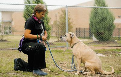 Williamson County Regional Animal Shelter provides care for homeless animals. Volunteers support the staff by socializing animals and assisting with cleaning, fundraising, off-site event assistance, office work and helping customers. n1855 SE Inner Loop, Georgetown n512-930-3592nhttp://pets.wilco.org