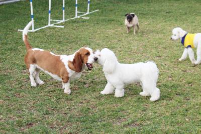 Playgroups are organized by dog size, play style and energy level