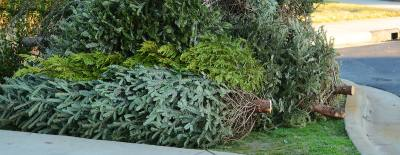 Christmas tree drop-off in Frisco began Dec. 26.
