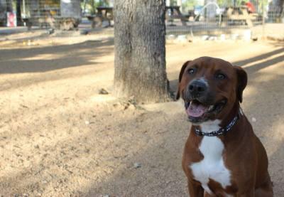 A dog plays at local dog park