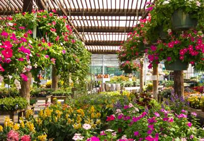 Calloway's Nursery in Flower Mound will celebrate its 10 year anniversary in September.