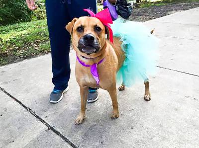 The annual Dog Jog and 5K Run is open to all levels and benefits Pflugerville Pets Alive. 7:15 a.m. $30 (age 16 and older), $15 (ages 7 to 15). Pfluger Park, 515 City Park Road, Pflugerville. 512-900-1772. www.pflugervillepetsalive.orgn